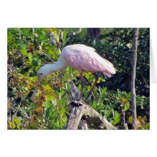 Cartão do Spoonbill róseo