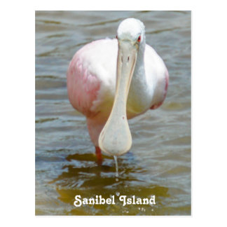 Cartão do Spoonbill róseo de Sanibel