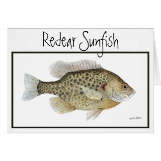 Cartão do Sunfish de Redear