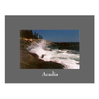 Cartão do surf do Acadia - 1