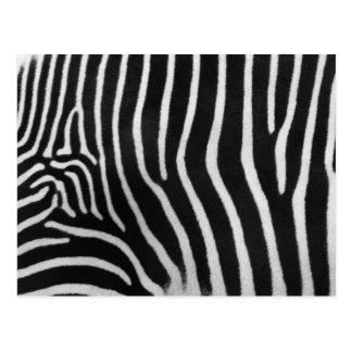 Cartão do teste padrão da listra da zebra