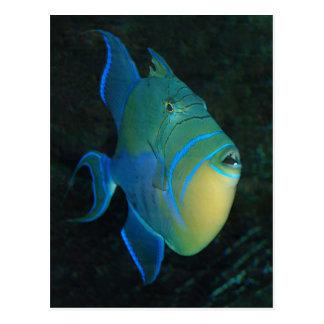Cartão do Triggerfish de rainha