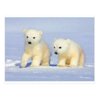 Cartão do urso polar