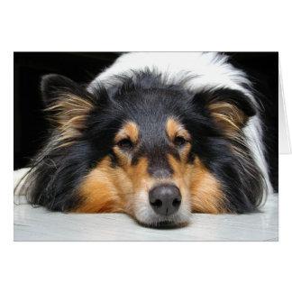 Cartão do vazio da cor do nariz de cão do Collie
