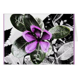 Cartão do vazio da flor da pervinca de Madagascar