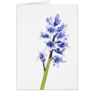Cartão do vazio da flor do Bluebell