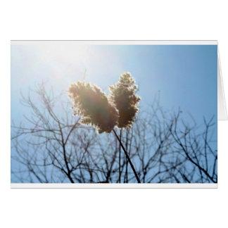 Cartão do vazio da grama selvagem
