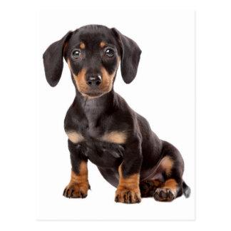 Cartão do vazio do cão de filhote de cachorro do cartão postal