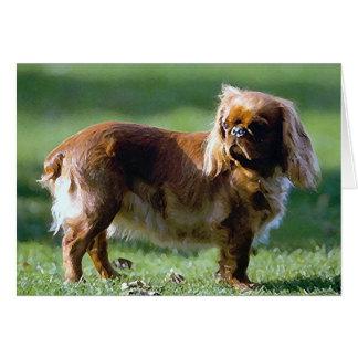 Cartão do vazio do cão do Spaniel de brinquedo