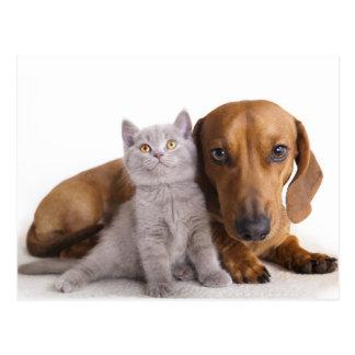 Cartão do vazio do gatinho de Dog& do filhote de