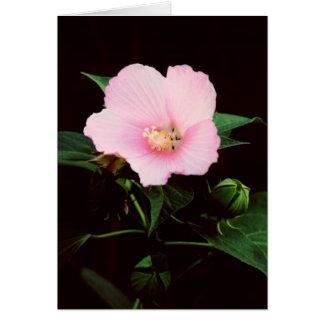 Cartão do vazio do Mallow cor-de-rosa