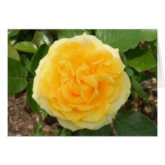 Cartão do vazio do rosa amarelo
