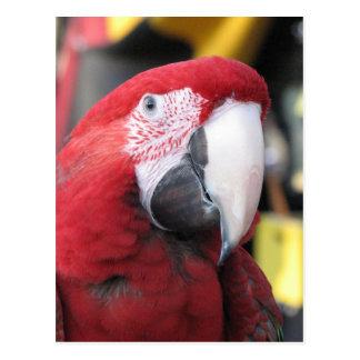 Cartão do vertical do Macaw