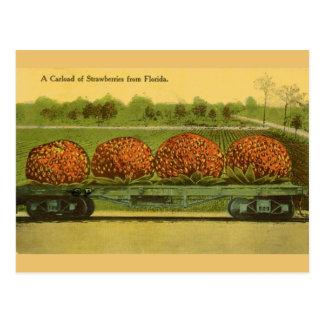 Cartão do viagem das morangos de Florida do