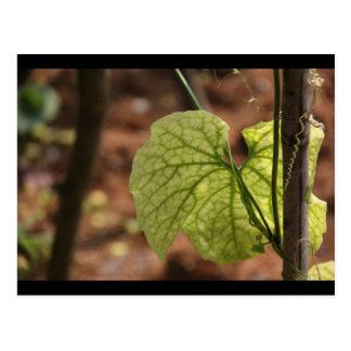 Cartão do vinhedo