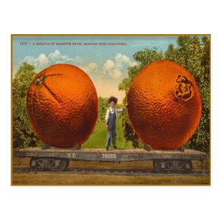 Cartão do vintage com as laranjas gigantescas