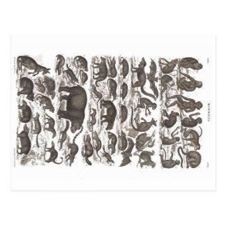 Cartão do vintage do impressão dos mamíferos 1860 cartão postal