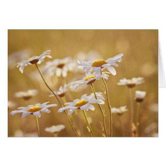 Cartão do Wildflower
