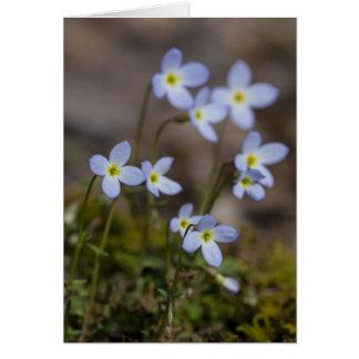 Cartão do Wildflower do primavera de Bluets