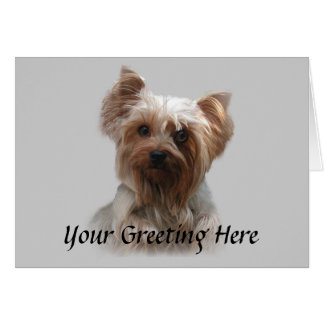 Cartão do yorkshire terrier