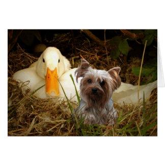 Cartão do yorkshire terrier com pato