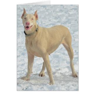 Cartão Doberman branco de sorriso