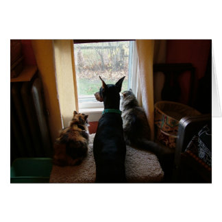 Cartão Doberman e gatos