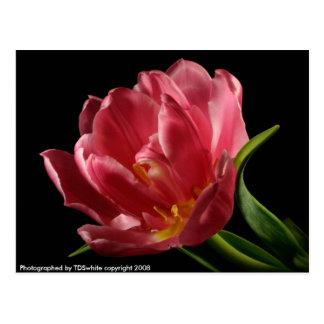 Cartão dobro da flor do primavera das flores da cartão postal