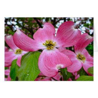 Cartão Dogwood cor-de-rosa