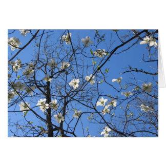 Cartão Dogwood de florescência