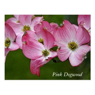 Cartão:  Dogwood horizontal Cartão Postal