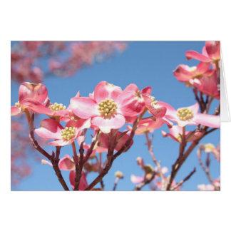 Cartão Dogwoods cor-de-rosa