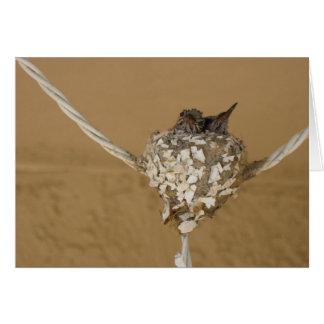 Cartão Dois colibris em um ninho