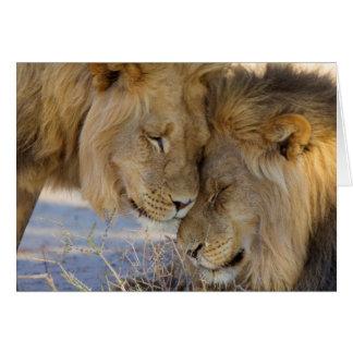 Cartão Dois leões que friccionam-se