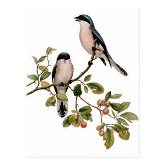 Cartão - dois pássaros cartão postal