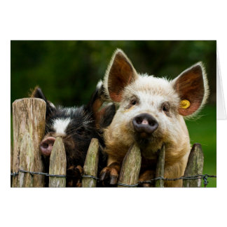 Cartão Dois porcos - fazenda de porco - fazendas da carne