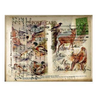Cartão dos animais selvagens do verão & do inverno cartão postal