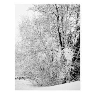 Cartão dos brancos do inverno