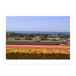 Cartão dos campos de flor de Carlsbad