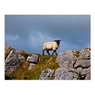 Cartão dos carneiros
