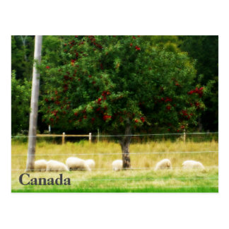 Cartão dos carneiros - Canadá
