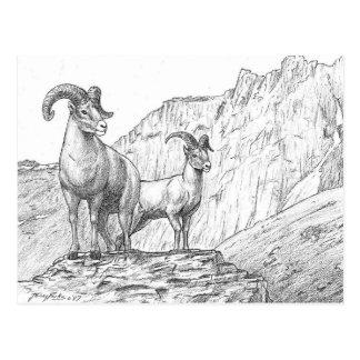 Cartão dos carneiros de Bighorn Cartão Postal