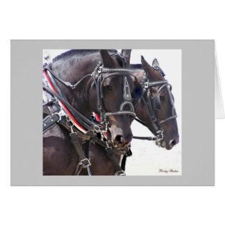 Cartão dos cavalos
