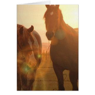 Cartão dos cavalos do por do sol