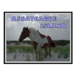 Cartão dos cavalos selvagens 2 de Assateague
