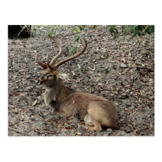 Cartão dos cervos de Eld