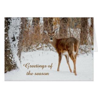 Cartão dos cervos de Whitetail do Natal dos