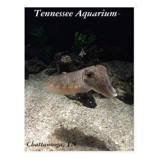 Cartão dos chocos do aquário de Tennessee