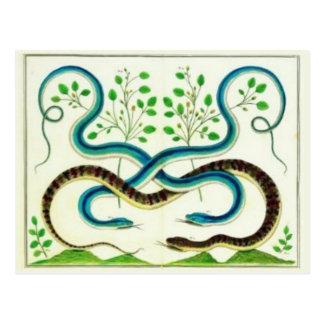 Cartão dos cobras