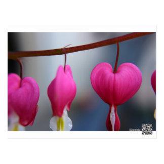 Cartão dos corações de sangramento